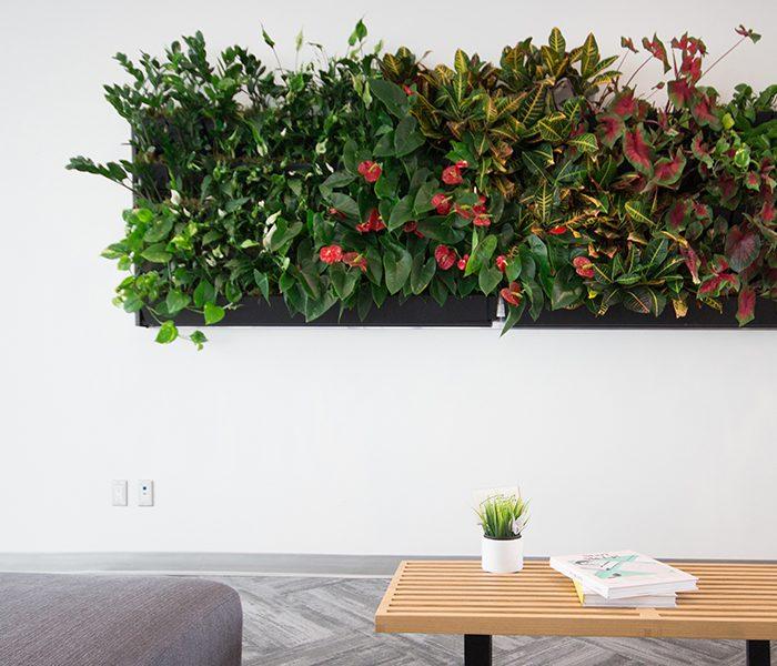 Custom designed living wall in office setting