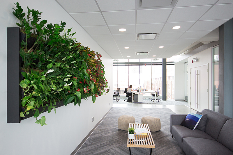 Modern office living wall